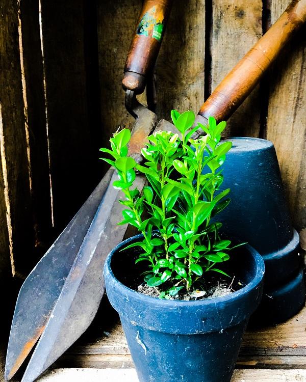 Zomercheck voor een zomerproof tuin