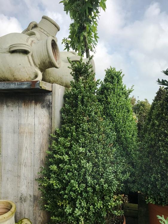 Buxus tuin inspiratie